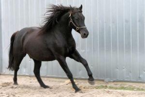 HORSE_sue_r_b_sxc.hu_photo_674978